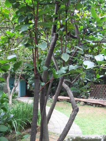 榕树叶子纸张顶端